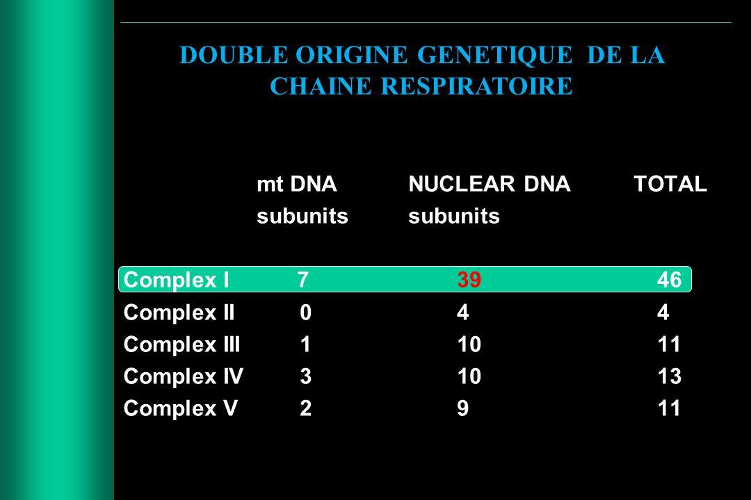 DOUBLE ORIGINE GENETIQUE DE LA CHAINE RESPIRATOIRE
