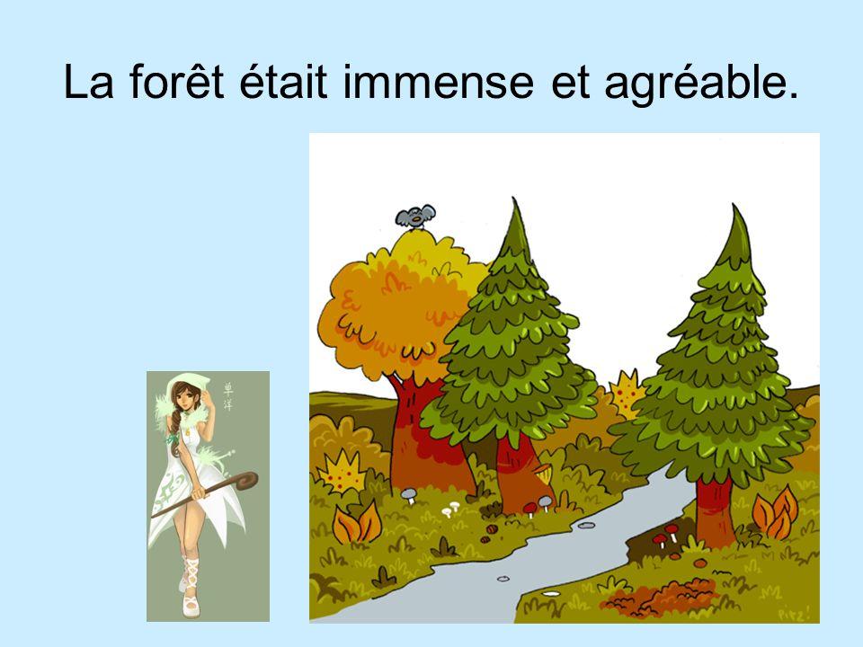 La forêt était immense et agréable.