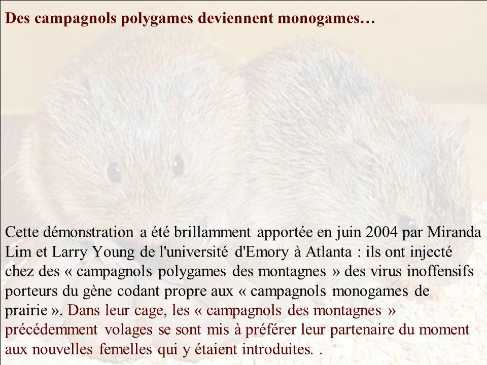 Des campagnols polygames deviennent monogames… Cette démonstration a été brillamment apportée en juin 2004 par Miranda Lim et Larry Young de l université d Emory à Atlanta : ils ont injecté chez des « campagnols polygames des montagnes » des virus inoffensifs porteurs du gène codant propre aux « campagnols monogames de prairie ».