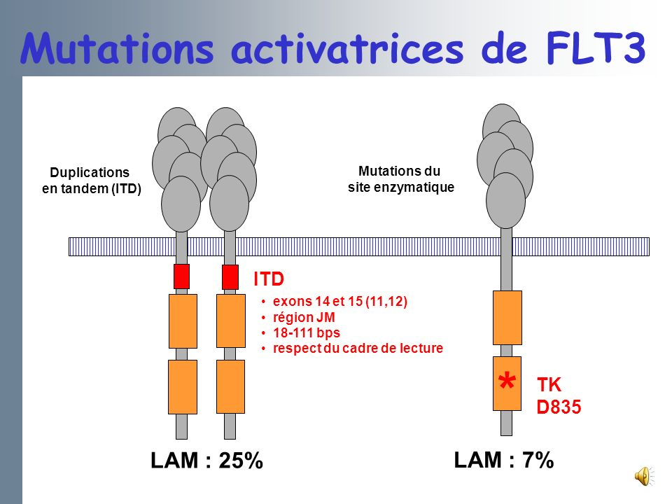 Mutations activatrices de FLT3