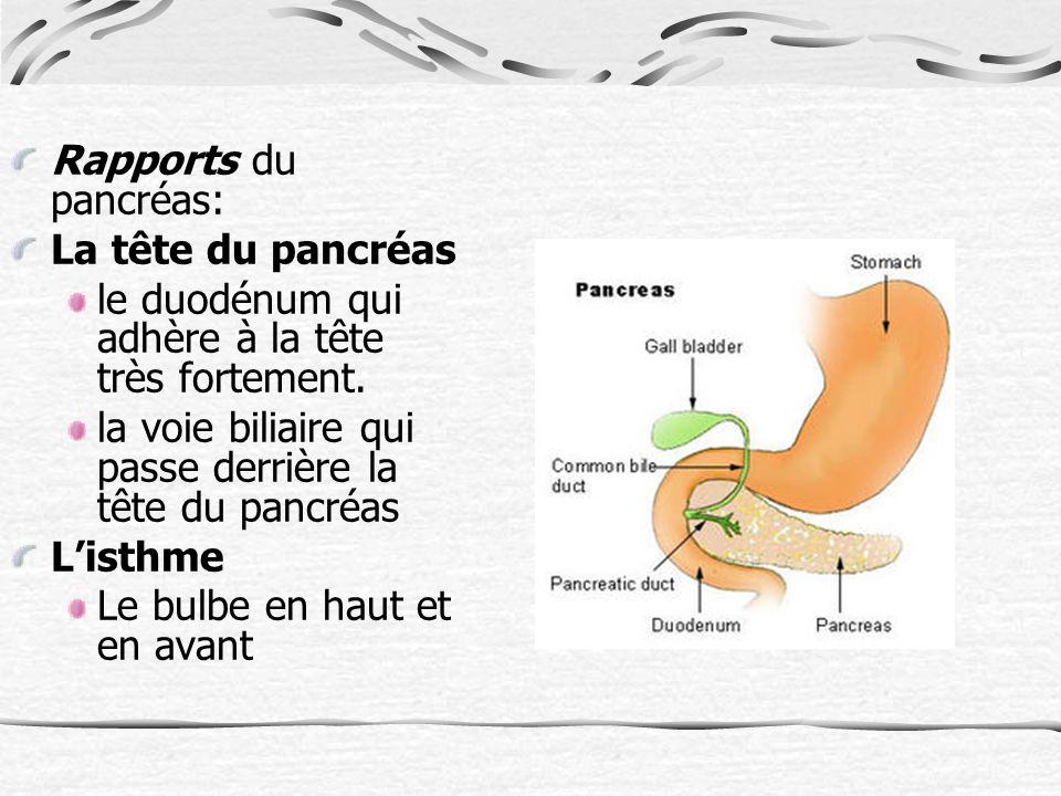Rapports du pancréas: La tête du pancréas. le duodénum qui adhère à la tête très fortement. la voie biliaire qui passe derrière la tête du pancréas.