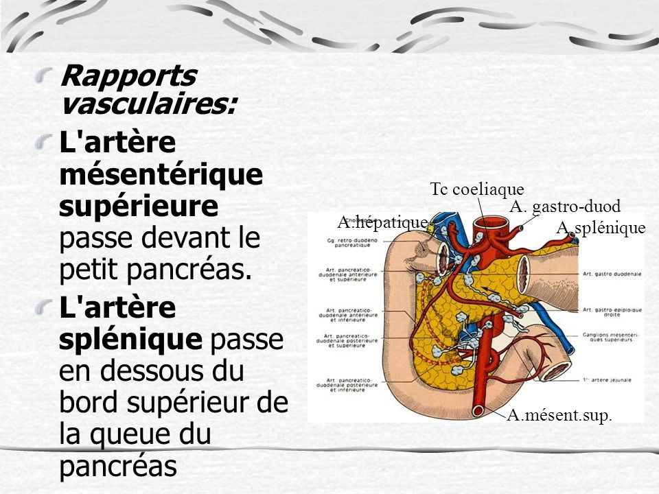 Rapports vasculaires: