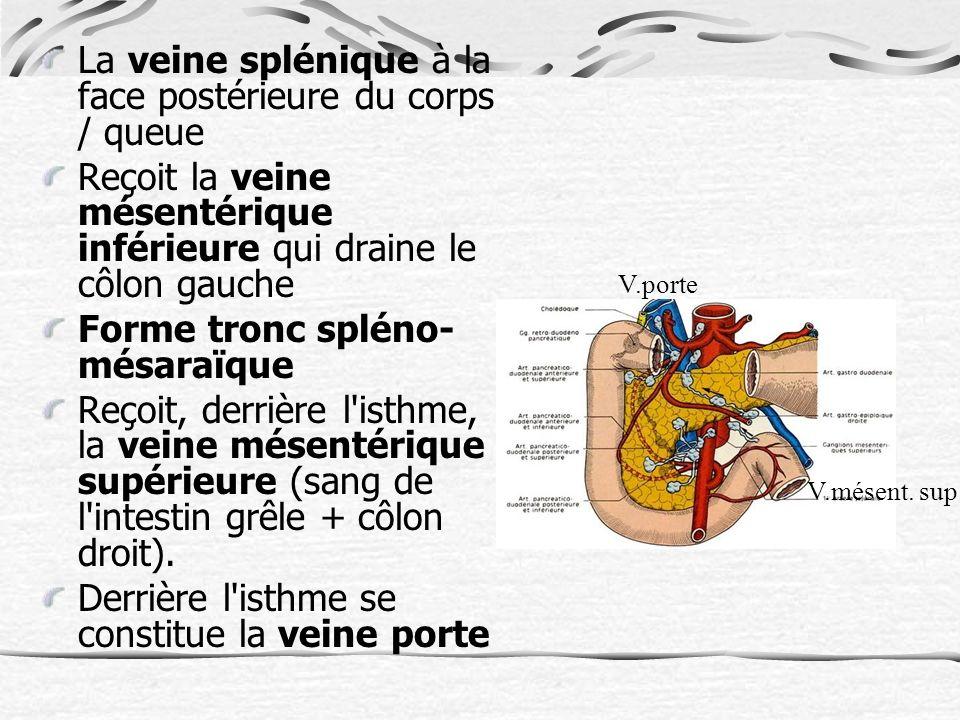 La veine splénique à la face postérieure du corps / queue