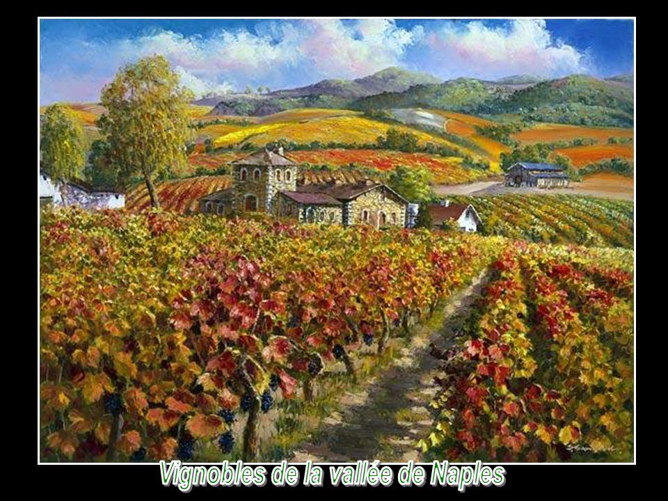 Vignobles de la vallée de Naples