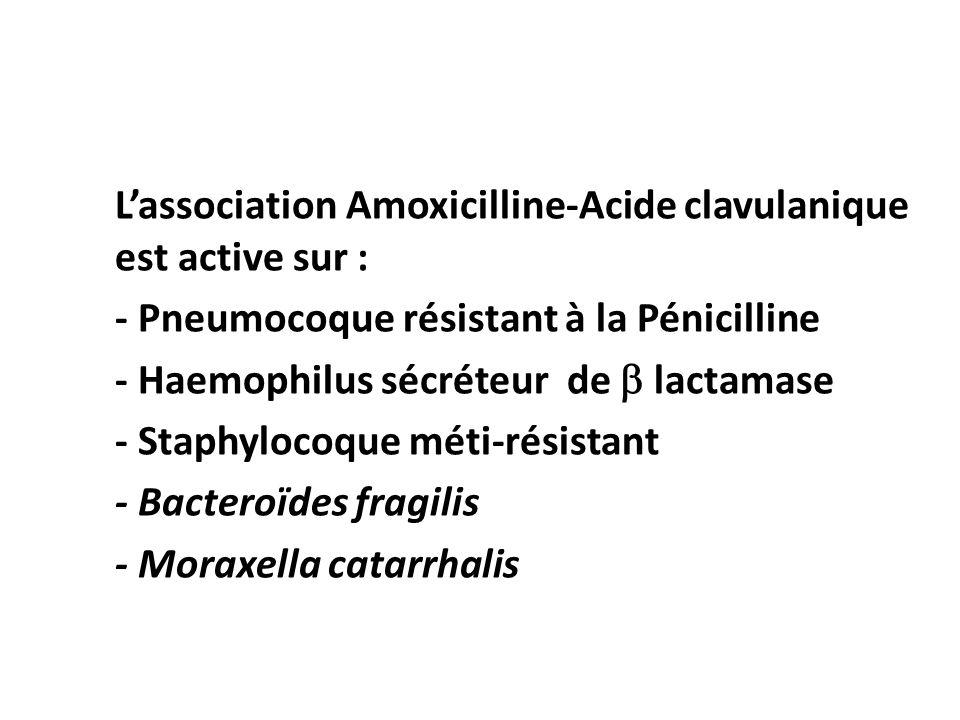 L'association Amoxicilline-Acide clavulanique est active sur :