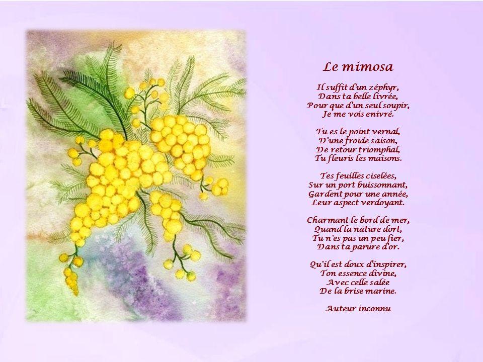 Le mimosa Il suffit d un zéphyr, Dans ta belle livrée, Pour que d un seul soupir, Je me vois enivré. Tu es le point vernal, D une froide saison, De retour triomphal, Tu fleuris les maisons. Tes feuilles ciselées, Sur un port buissonnant, Gardent pour une année, Leur aspect verdoyant. Charmant le bord de mer, Quand la nature dort, Tu n es pas un peu fier, Dans ta parure d or. Qu il est doux d inspirer, Ton essence divine, Avec celle salée De la brise marine.