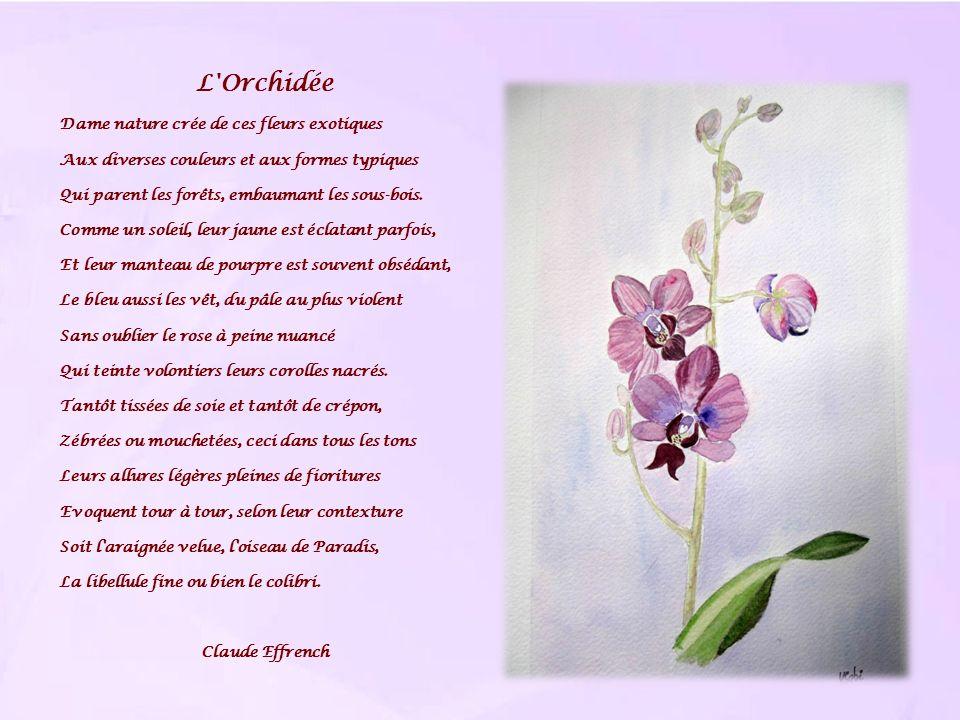 L Orchidée Dame nature crée de ces fleurs exotiques