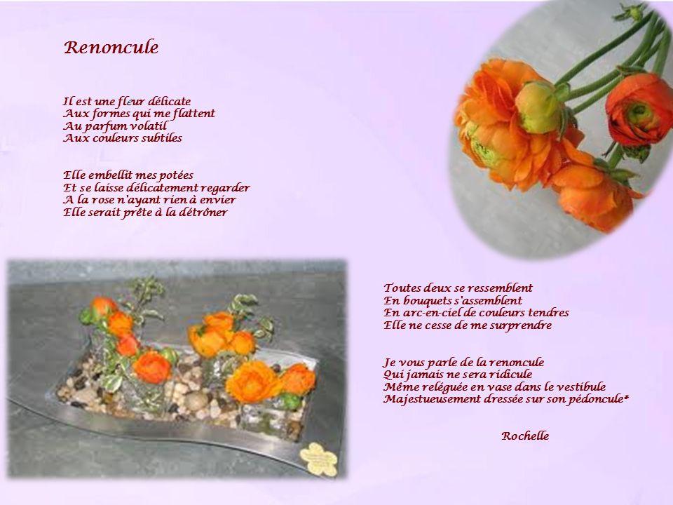 Renoncule Il est une fleur délicate Aux formes qui me flattent