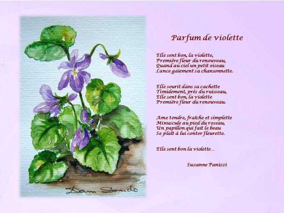 Parfum de violette Elle sent bon, la violette,