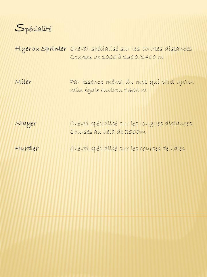 Spécialité Flyer ou Sprinter Cheval spécialisé sur les courtes distances. Courses de 1000 à 1300/1400 m.