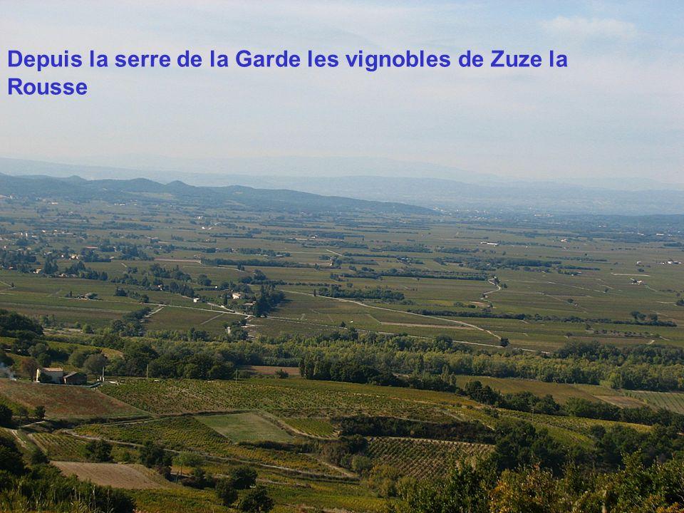 Depuis la serre de la Garde les vignobles de Zuze la Rousse