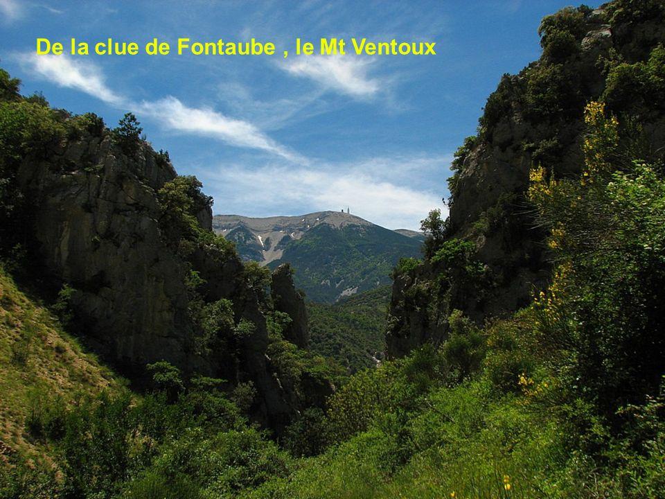 De la clue de Fontaube , le Mt Ventoux
