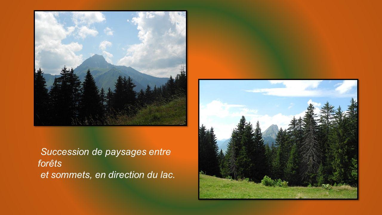 Succession de paysages entre forêts