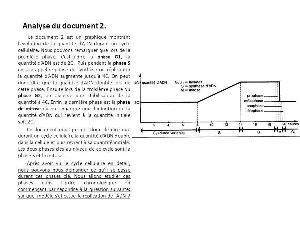 Analyse du document 2.