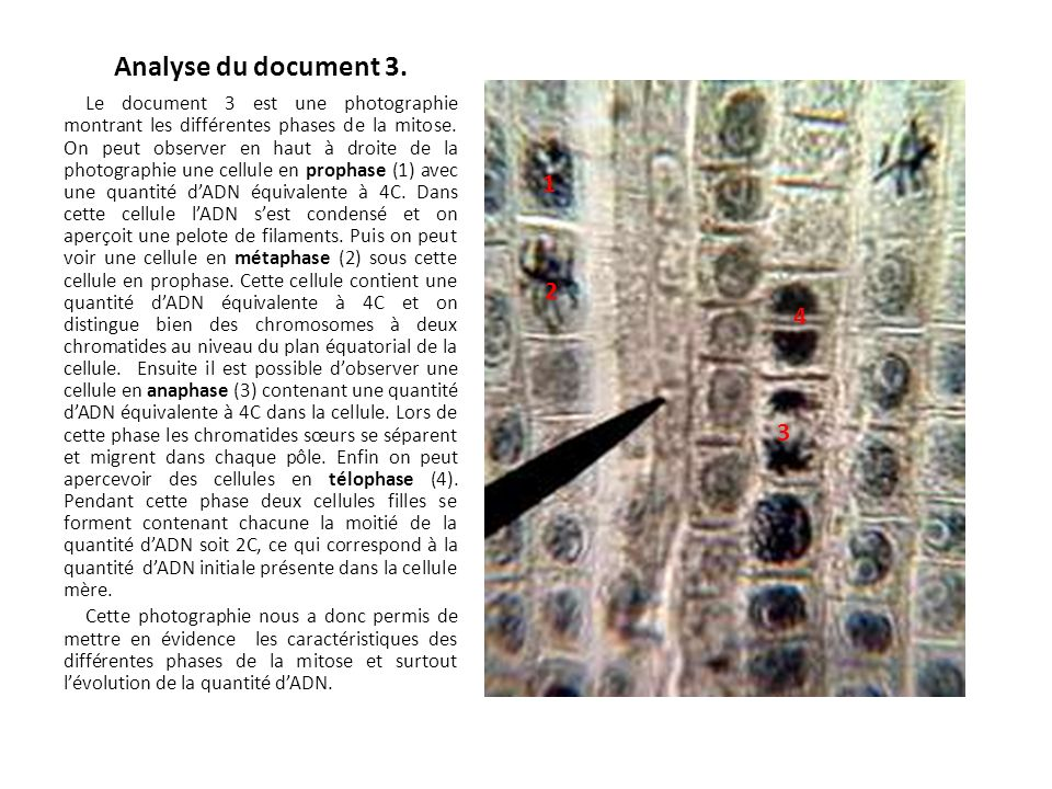 Analyse du document 3.
