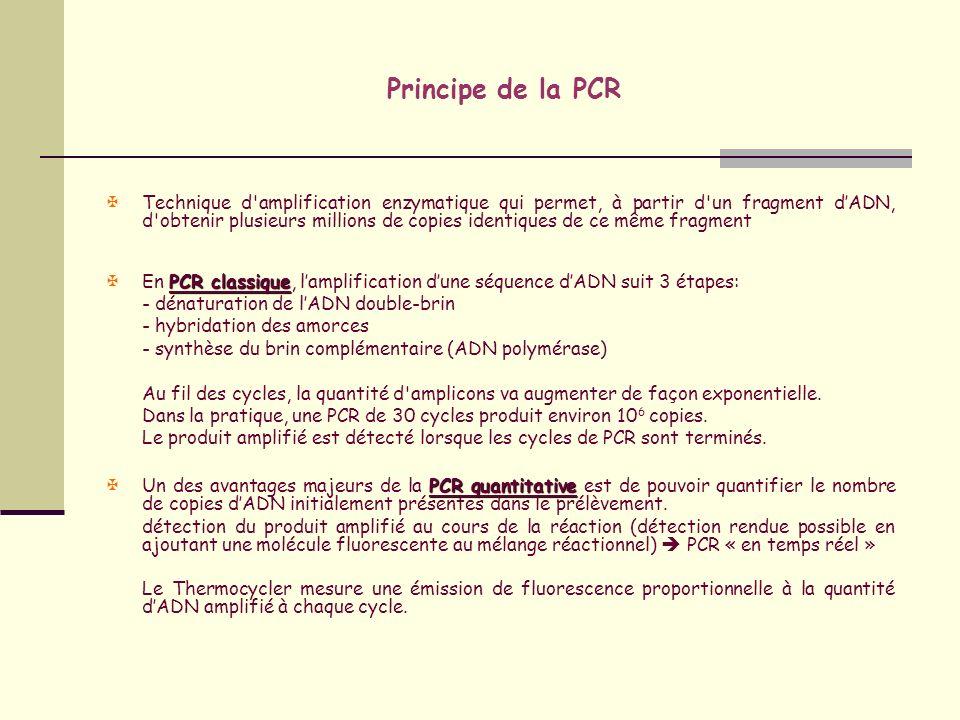 Principe de la PCR