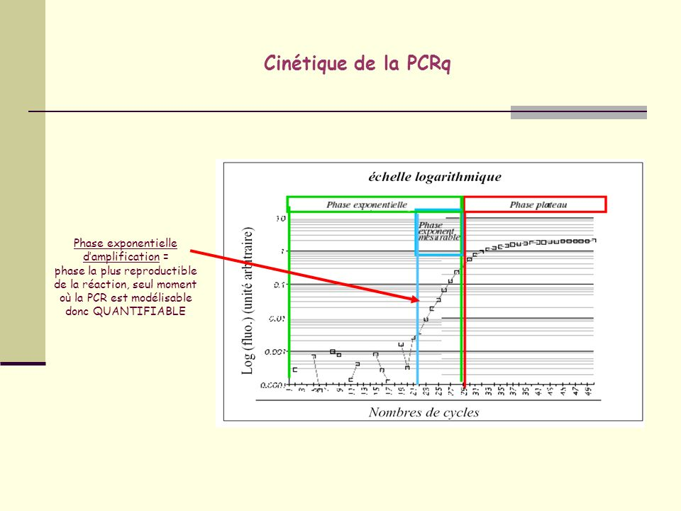 Phase exponentielle d'amplification =