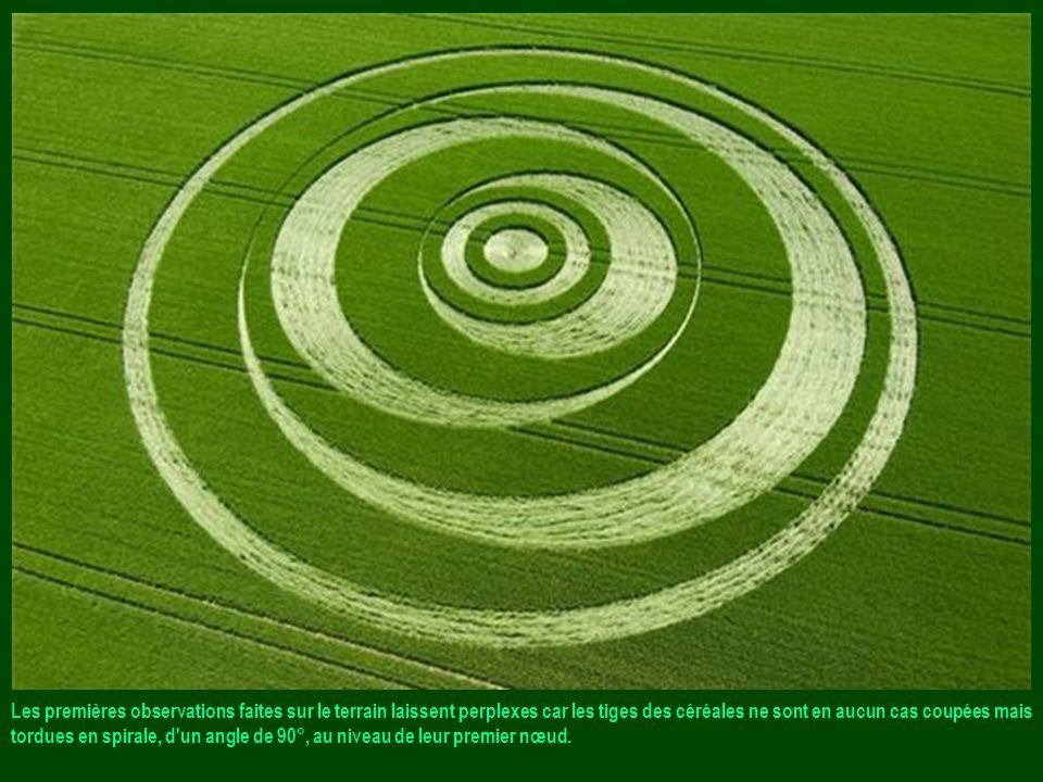 Les premières observations faites sur le terrain laissent perplexes car les tiges des céréales ne sont en aucun cas coupées mais tordues en spirale, d un angle de 90°, au niveau de leur premier nœud.