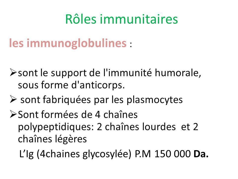 Rôles immunitaires les immunoglobulines :