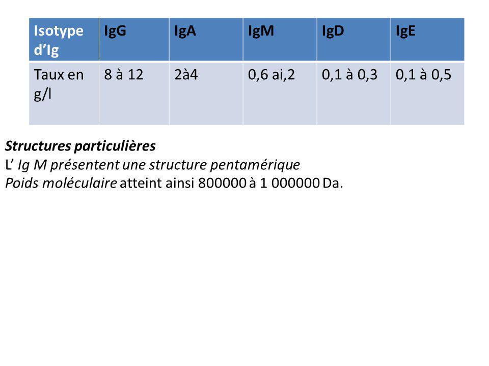Isotype d'Ig IgG IgA IgM IgD IgE Taux en g/l 8 à 12 2à4 0,6 ai,2