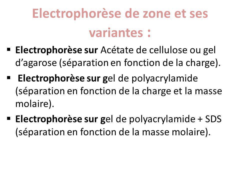 Electrophorèse de zone et ses variantes :