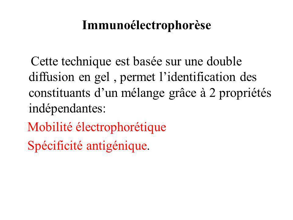 Immunoélectrophorèse
