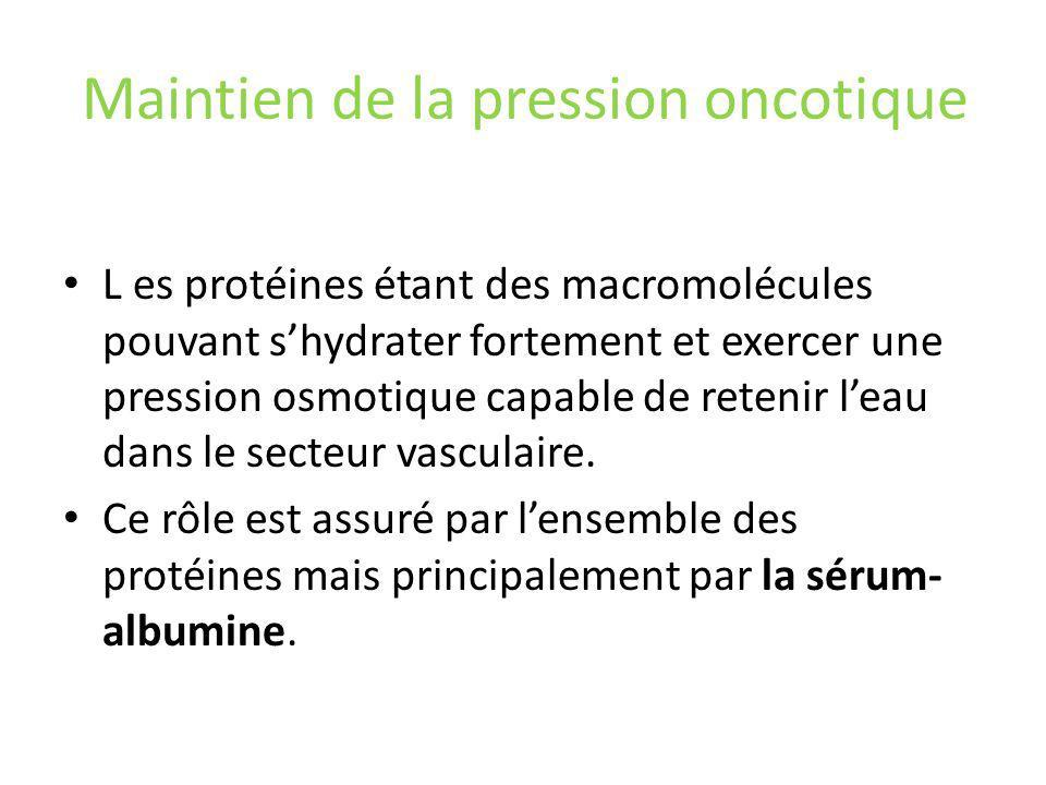 Maintien de la pression oncotique