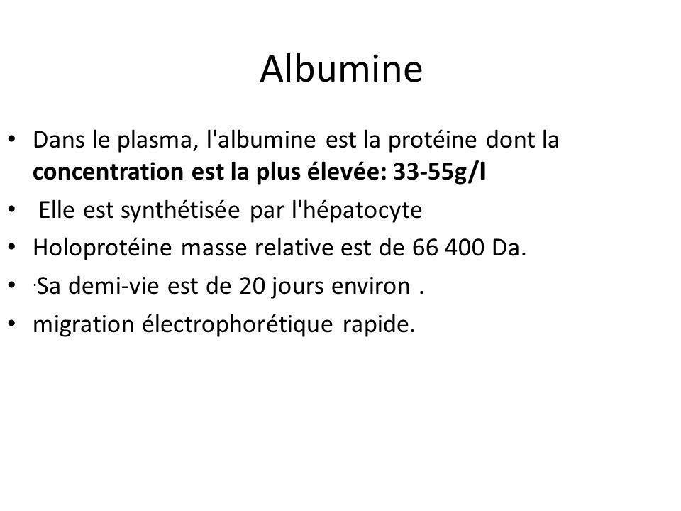 Albumine Dans le plasma, l albumine est la protéine dont la concentration est la plus élevée: 33-55g/l.