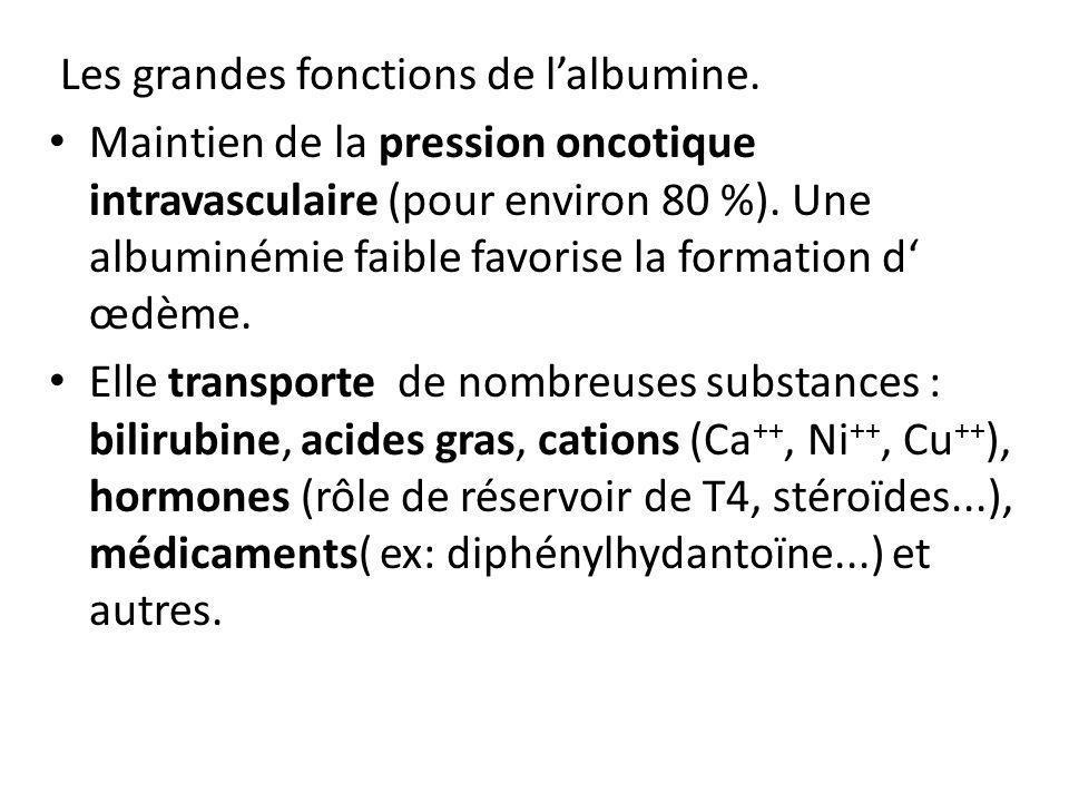 Les grandes fonctions de l'albumine.