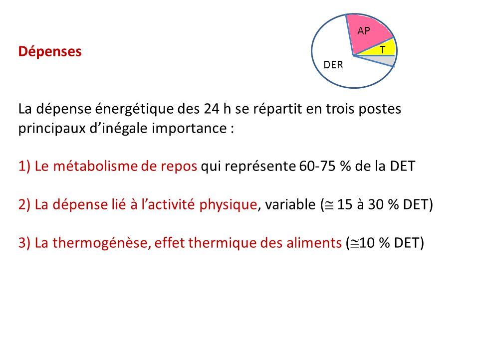 1) Le métabolisme de repos qui représente 60-75 % de la DET