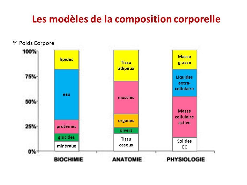 Les modèles de la composition corporelle