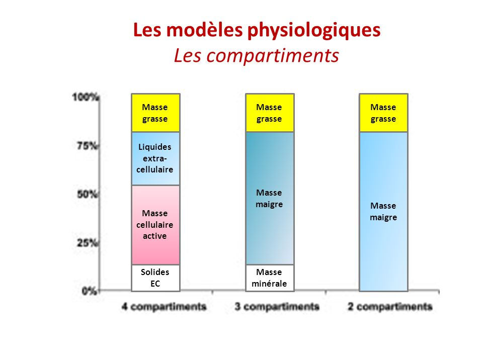 Les modèles physiologiques