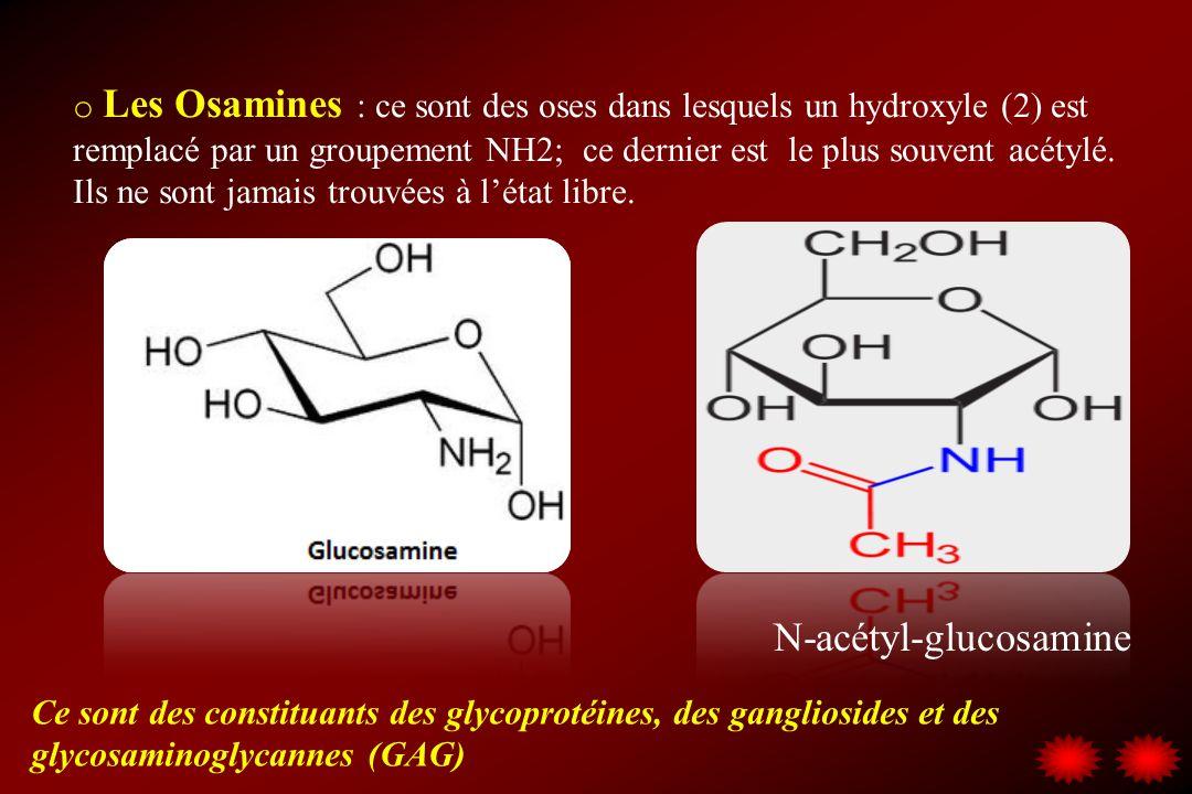 N-acétyl-glucosamine