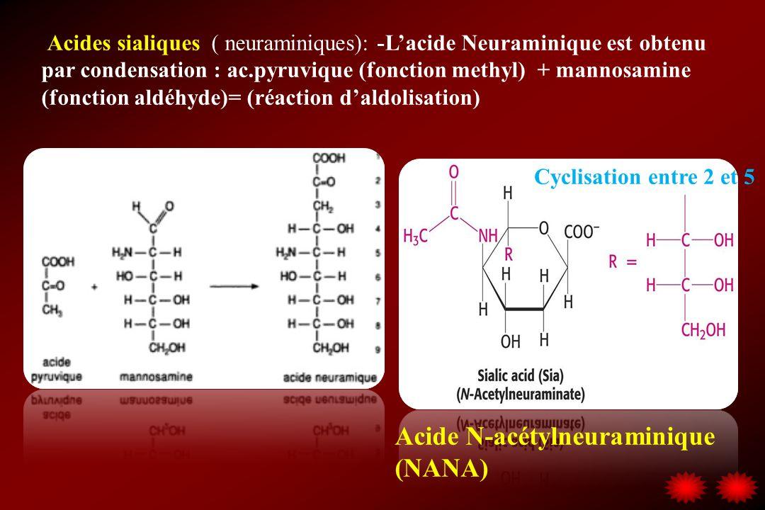 Acide N-acétylneuraminique (NANA)