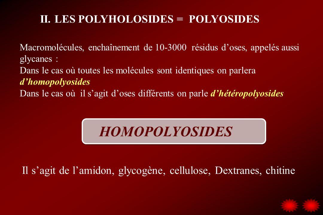 HOMOPOLYOSIDES II. LES POLYHOLOSIDES = POLYOSIDES