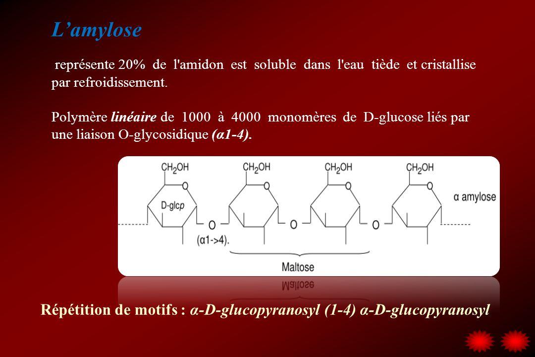 L'amylose représente 20% de l amidon est soluble dans l eau tiède et cristallise par refroidissement.
