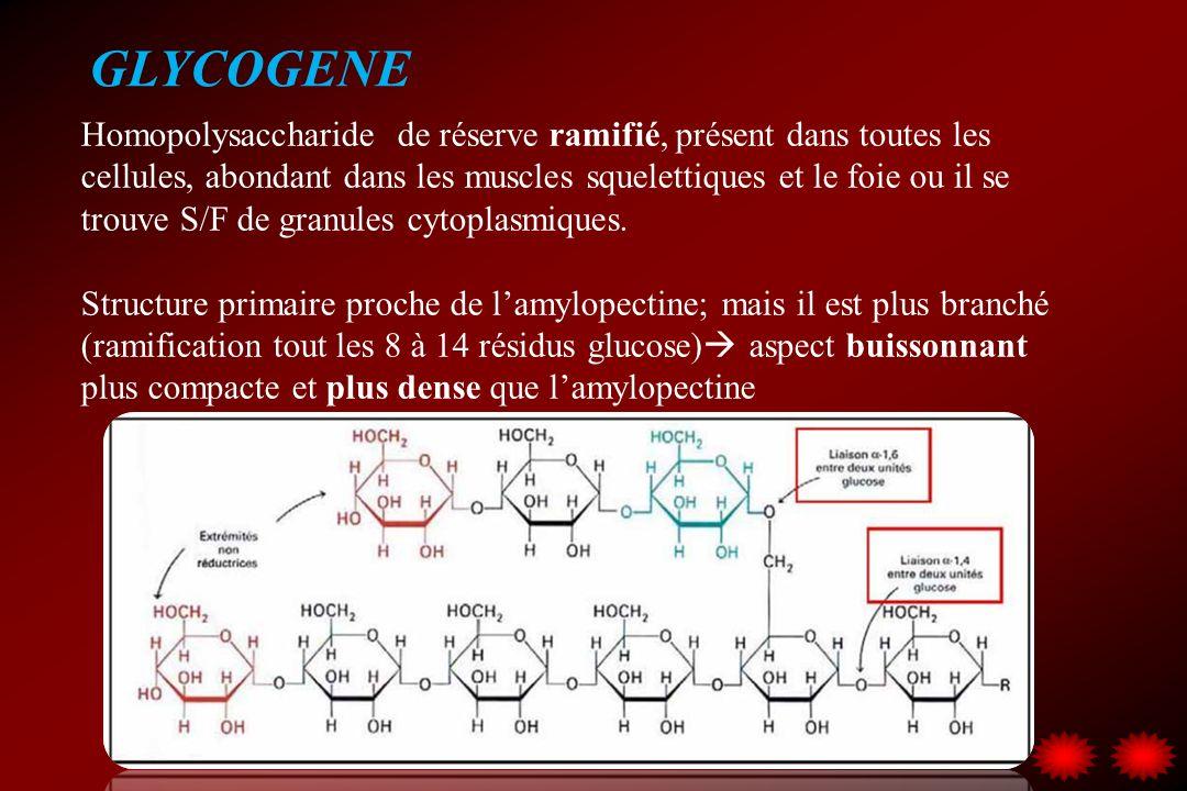 GLYCOGENE