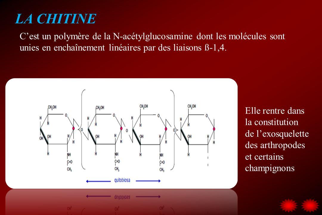 LA CHITINE C'est un polymère de la N-acétylglucosamine dont les molécules sont unies en enchaînement linéaires par des liaisons ß-1,4.