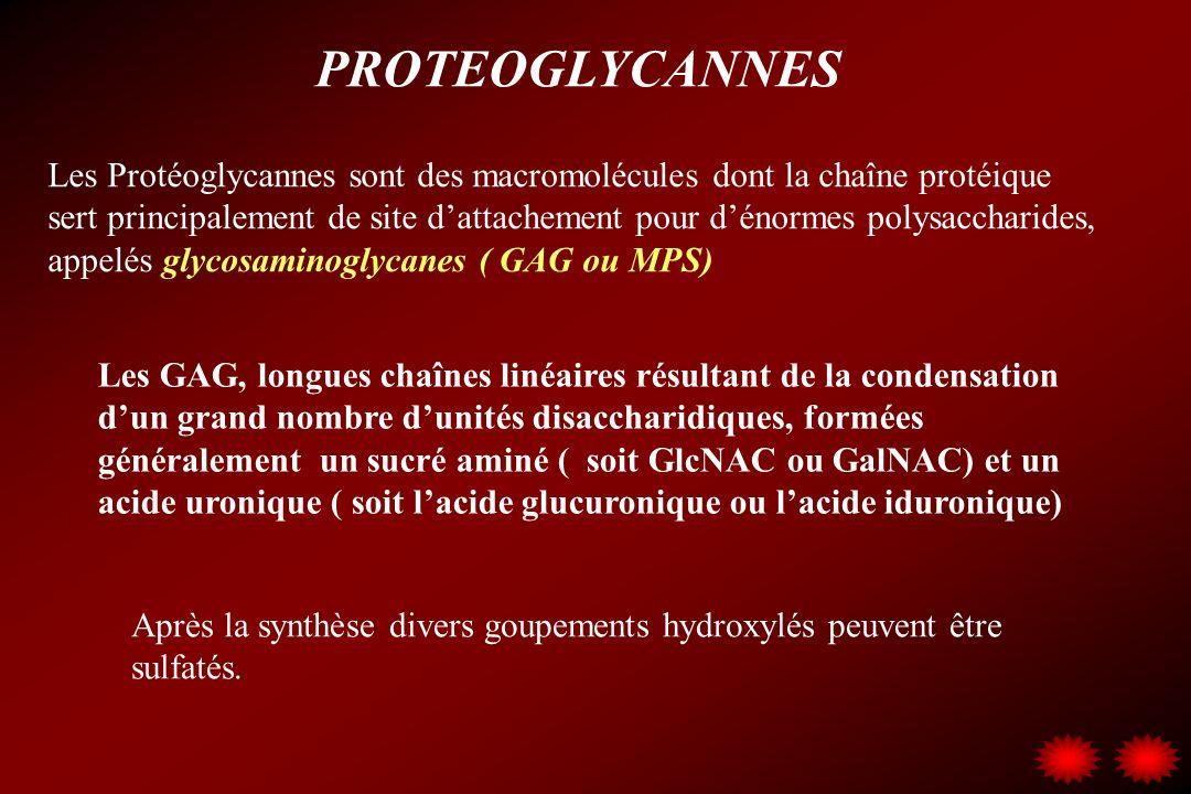 PROTEOGLYCANNES