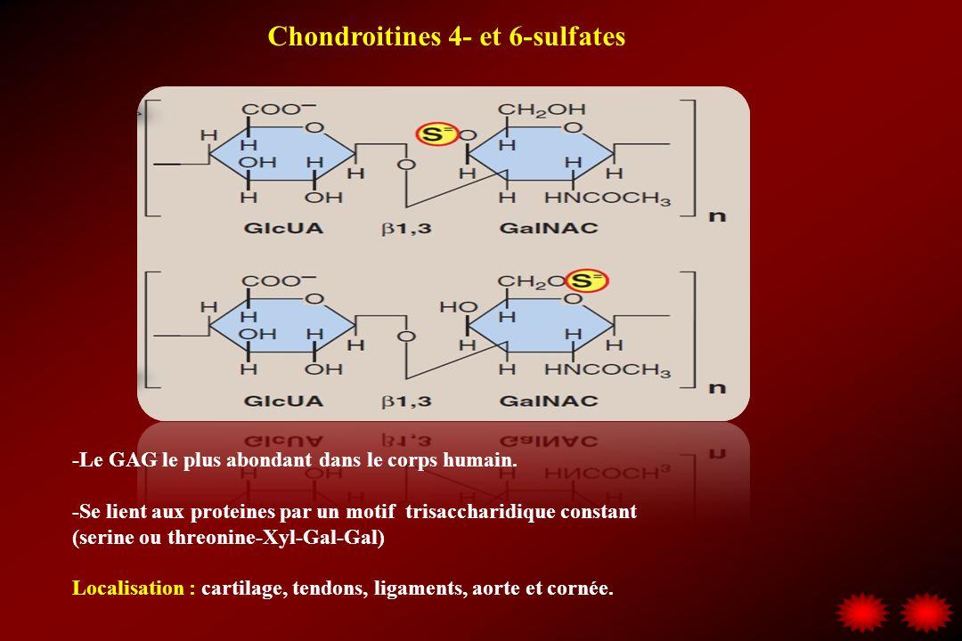 Chondroitines 4- et 6-sulfates