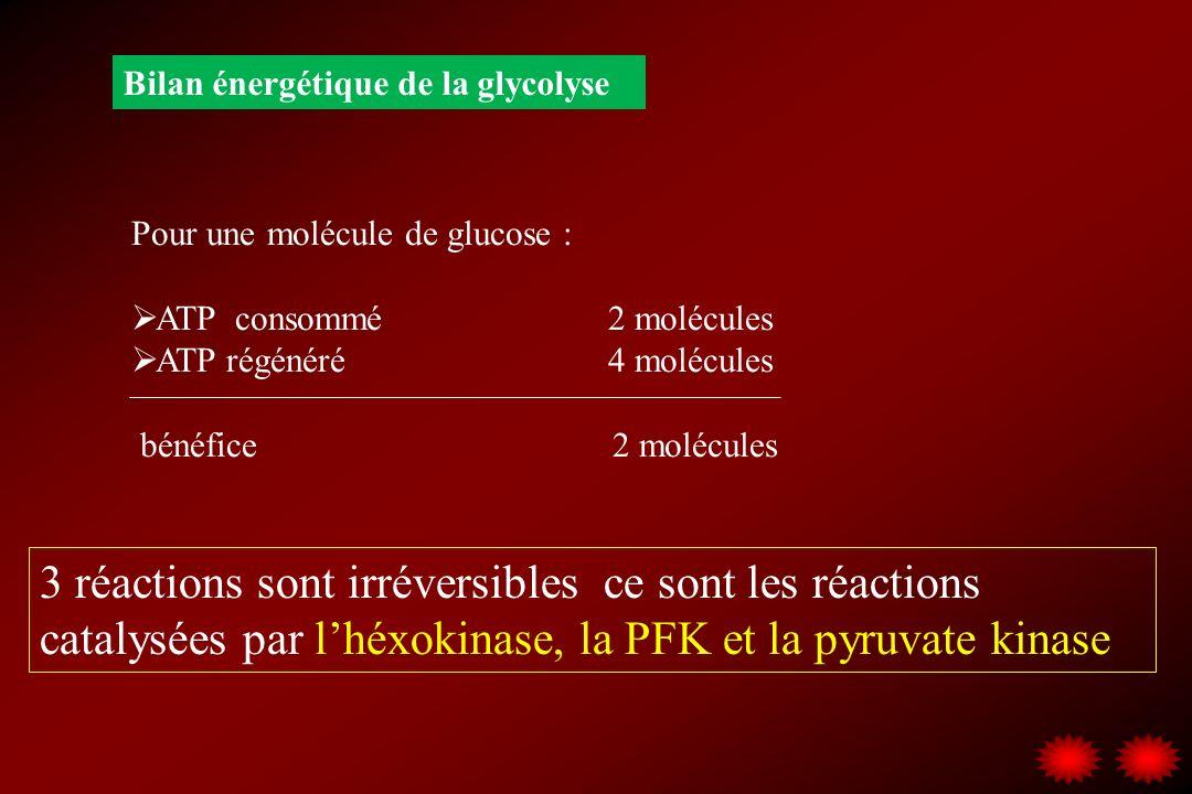 Bilan énergétique de la glycolyse