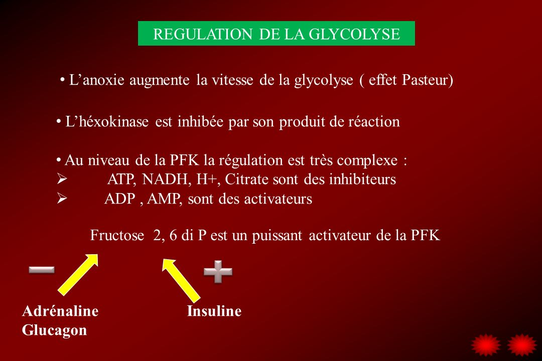 REGULATION DE LA GLYCOLYSE
