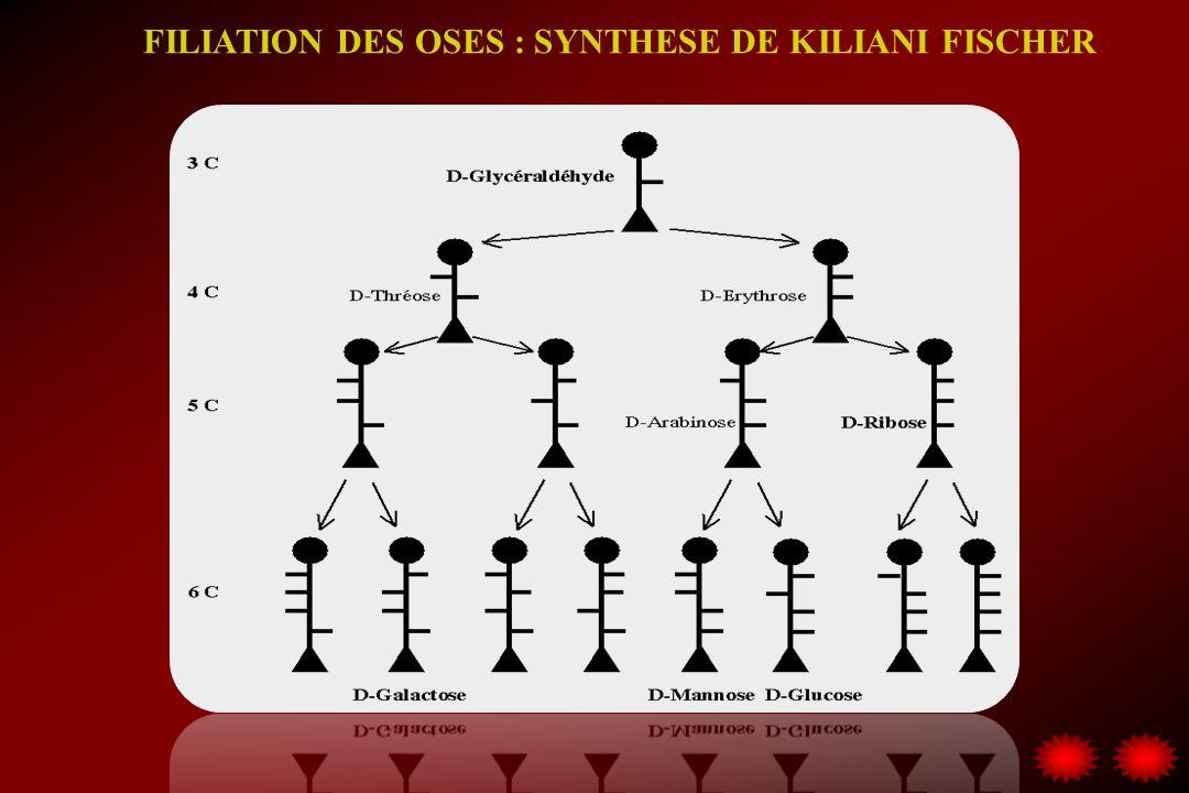 FILIATION DES OSES : SYNTHESE DE KILIANI FISCHER