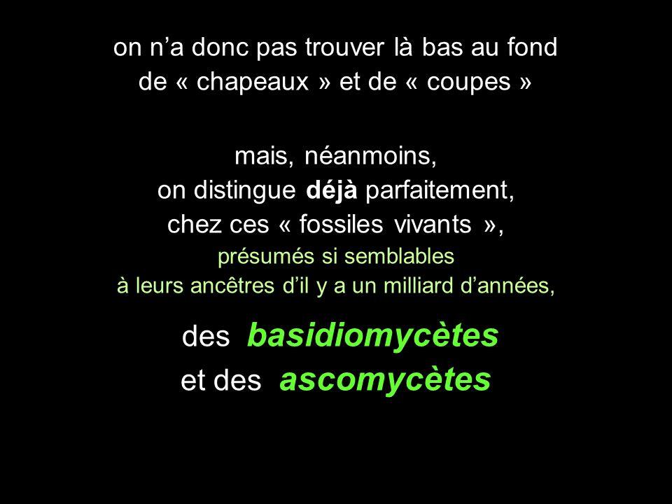 des basidiomycètes et des ascomycètes