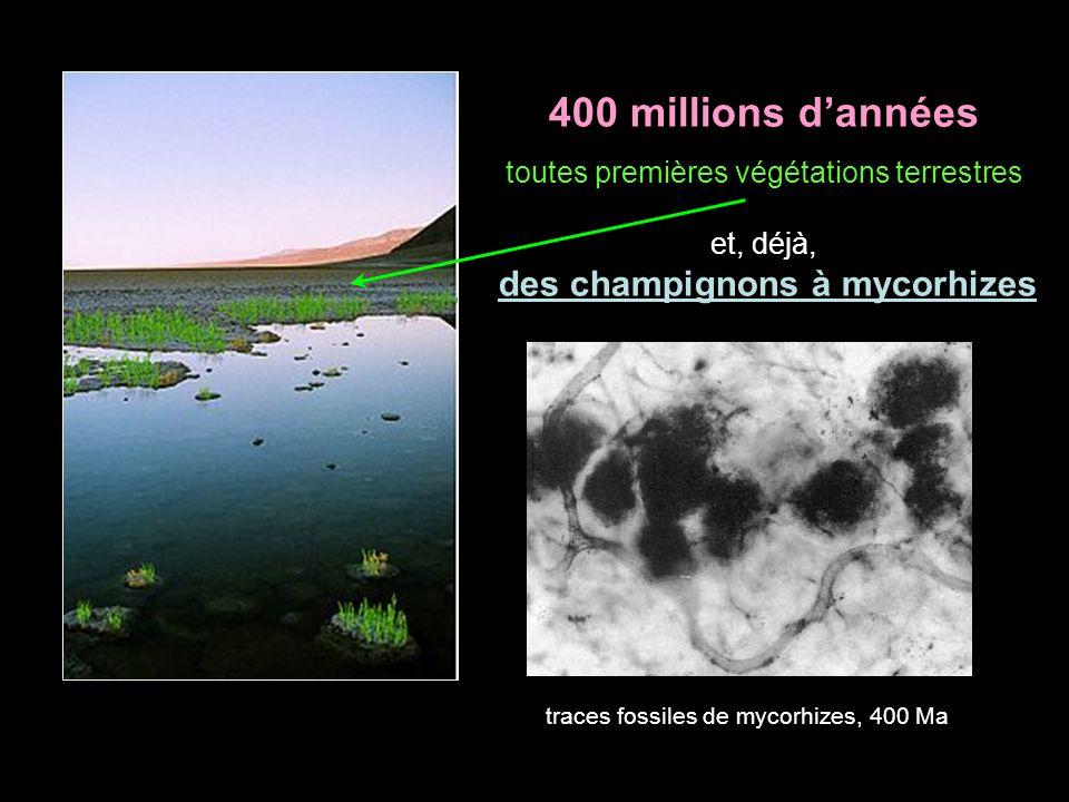 400 millions d'années toutes premières végétations terrestres