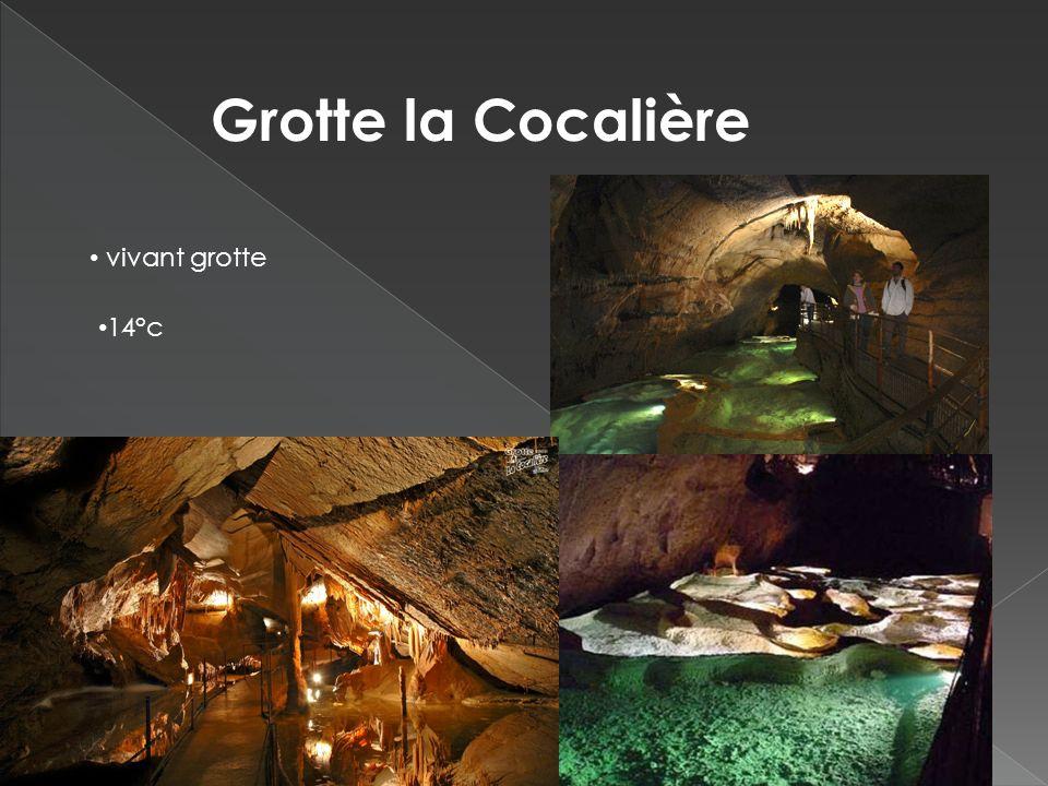Grotte la Cocalière vivant grotte 14°c