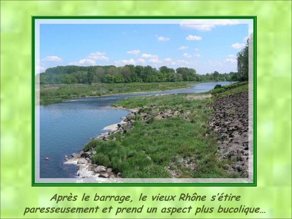 Après le barrage, le vieux Rhône s'étire paresseusement et prend un aspect plus bucolique…