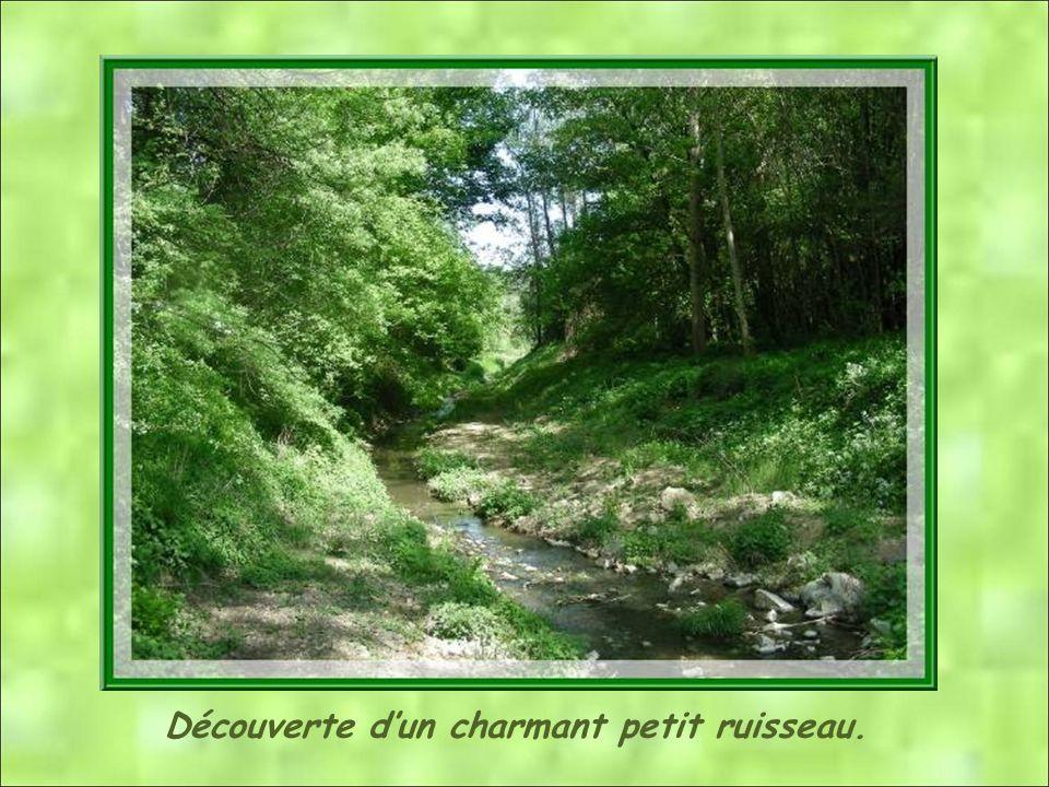 Découverte d'un charmant petit ruisseau.