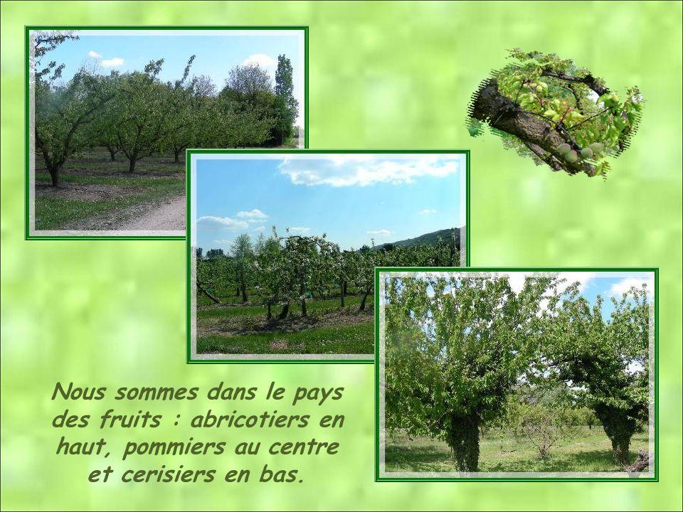 Nous sommes dans le pays des fruits : abricotiers en haut, pommiers au centre et cerisiers en bas.
