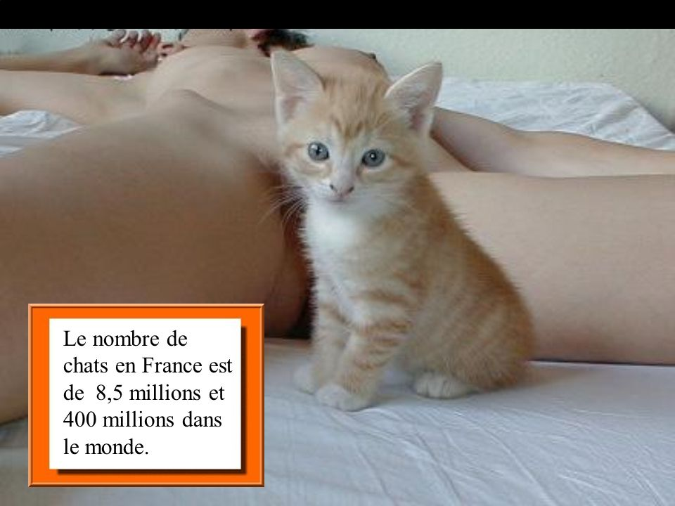 Le nombre de chats en France est de 8,5 millions et 400 millions dans le monde.